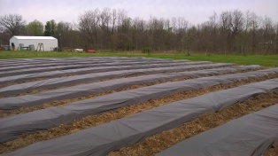 Tomato beds waiting for transplants